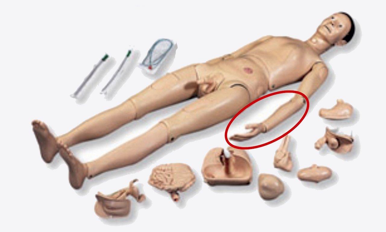 Antebrazo izquierdo de repuesto con mano para P10 | CUIDADO DE ENFERMOS